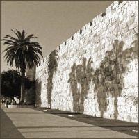 Про пальмы.., Иерусалим