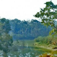 A Terai Stream in Dudhwa National Park, Балли
