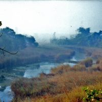 Marshy channel in Dudhwa National Park, Балли