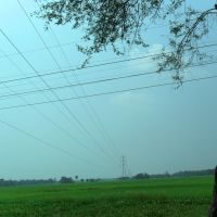 PADDY-FIELD,  NEAR MOHANPUR, Бхатпара