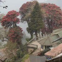 Darjeeling., Даржилинг