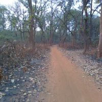 Forest Road Bidhannagar Side (Dibakar), Дургапур