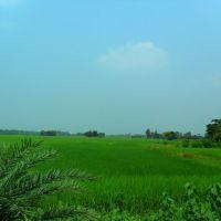 PADDY-FIELD  ( FALTA), Кхарагпур