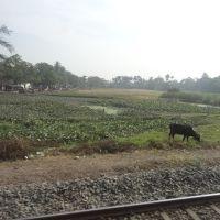 Sodpur to Khardaha, Панихати