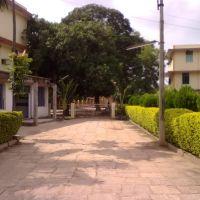 St francis school, Биласпур
