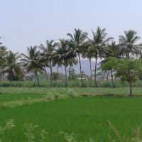 ◊ ◊ ◊ iNDiA ◊ ◊ ◊ KARNATAKA ◊ ◊ ◊, Бияпур