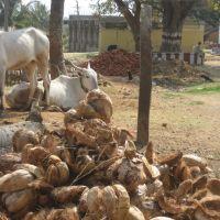 Von Chitradurga nach Hospet, Давангер