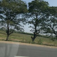 Rajupalem, Andhra Pradesh, India, NH 5., Анакапал