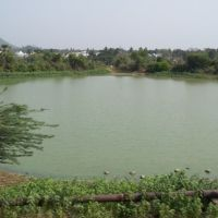 Pond near Kothapet,Vijayanagaram. 7845 143207, Визианагарам