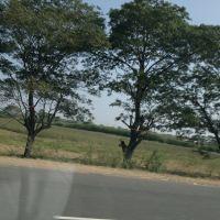 Rajupalem, Andhra Pradesh, India, NH 5., Вияиавада