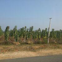 Teak Garden,Nalgonda, Andhra Pradesh, India, Гунтакал