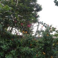 gokulam flowers, Какинада