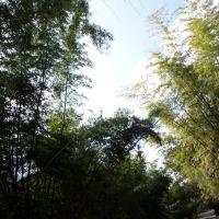 BAMBOO FOREST SRISAILAM,AP, Проддатур