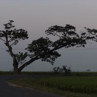 Nelapadu Road, Тенали