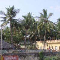 తెనాలి  தெனாலி तॆनाली Tenali  8325., Тенали