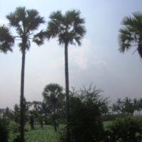 near Katevaram 8350., Тенали