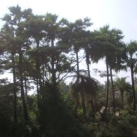 Katevaram 8351., Тенали