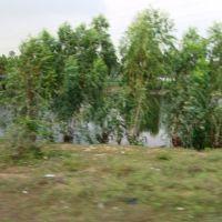 Bapatla West Pond బాపట్ల பாபட்லா बापट्ला Bapatla8214, Чирала
