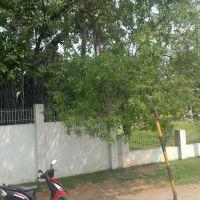 Ambedkar Nagar, Chittoor, Andhra Pradesh 517002, India, Читтур