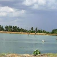 Kattamanachi lake, Читтур