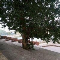 Godhra Orignal city, Годхра