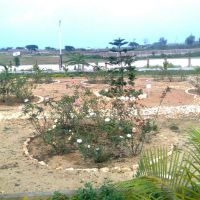 under birsa munda park, Дханбад