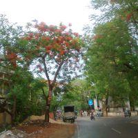 Road near Siram toli Chowk,Ranchi, Ранчи