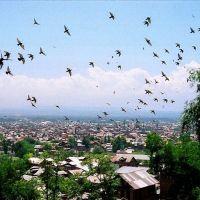 Srinagar, Сринагар