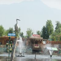 Crane perched on fence at Dal Lake: Srinagar, Kashmir Valley, Jammu and Kashmir, Сринагар