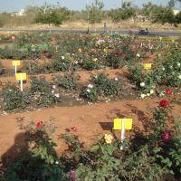 Rose garden, Индаур