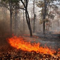 Fire in a dry deciduous forest, Кхандва