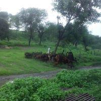 Katni Junction,Madhya Pradesh, Мурвара