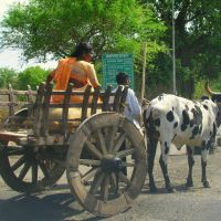 Wooden cart,  Dřevěna dvoukolka, Ахалпур