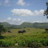 Maharastra countryside, Барси