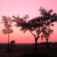 Tree, Барси