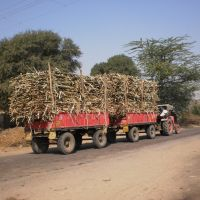 "Hauling sugarcane -  two trollies - one tractor,Passing through ""sugar Belt"" of Maharashtra., Кхамгаон"