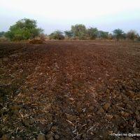 Black regur soil, Малегаон