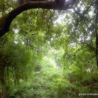 Green, Maharajbag, Nagpur, Нагпур