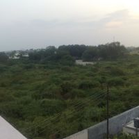 EVERGREEN FOREST OF NANDURBAR!, Нандурбар