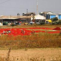 PC310439 નન્દુબાર- மிளகாய் களம், நந்துபார் नंदू मिर्ची नन्दुबार  11.43.55, Нандурбар