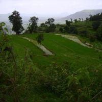 my green Satara!, Сатара