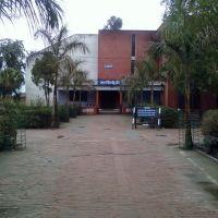 Library, Батала