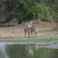 Keoladeo National Park, à Bharatpur, Аймер