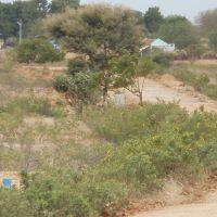 தொட்டிபட்டி( ரெத்தினம் அம்மாள் நிலத்திற்கு  வருவதற்கான பாதை (www.srisairamacademy.blogspot.com)), Аруппокоттаи