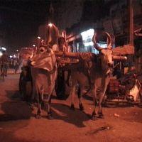 Madurai, Мадурай
