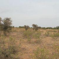 தொட்டிபட்டி (www.srisairamacademy.blogspot.com), Нагеркоил