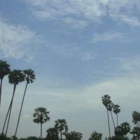 Thimmaraajapuram  திம்மராஜபுரம்  തിമ്മ രാജ പുരം  తిమ్మరాజపురం तिम्माराजपुरम   6317, Тирунелвели