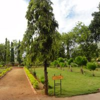 Tree Planted by Ms. Sonia Gandhi, Тируччираппалли