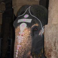 Trichy rock fort - elefante sacro, Тируччираппалли