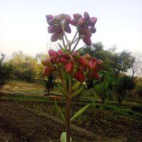 Naqvi park            naturephotographyindia.com, Алигар